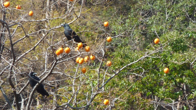 Crows in the Persimmon Tree